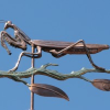 Praying Mantis Weathervane