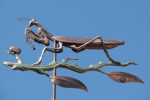 Praying-Mantis-Weathervane-080414-W7