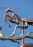 Praying-Mantis-Weathervane-080414-W8