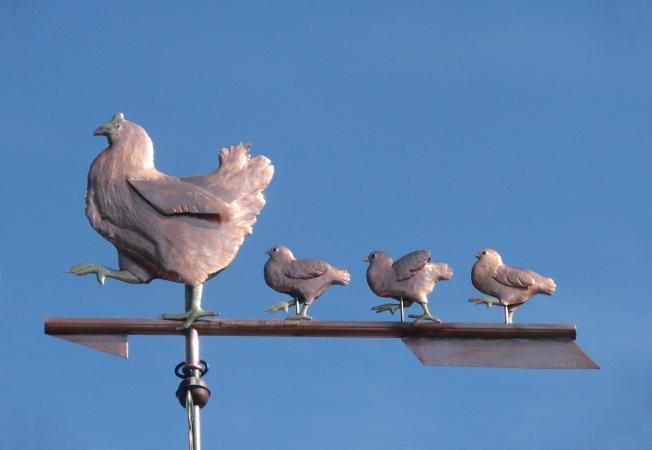 Hen and Chicks Weathervane 082719 m3